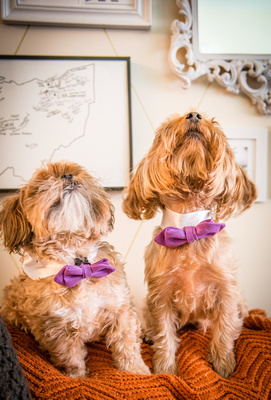 """Bow, """"Bow tie"""", """"Bow ties"""", Bowties, Bowtie, Tie, Babies, Children, Dress, Fancy, Dogs, Dog, Puppy, Puppies, Pup, Pups, Animals, Collar, Costume, Sunday, Best, Dresses, """"Just Smile"""", Accessories, DC, VA"""