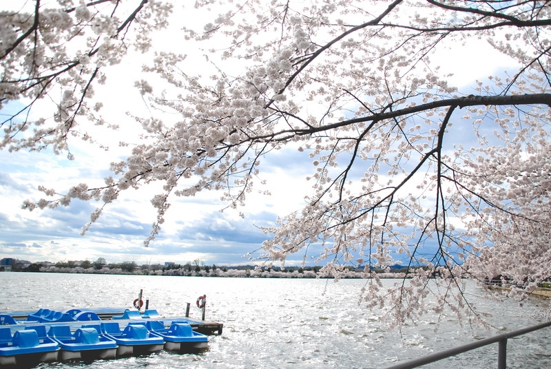 """Cherry Blossoms, Cherry Blossom, Festival, Accent, Accented, Aisle, Alepin, Alternative, Amazing, Antique, Antlers, Arch, Art, Artist, Artistic, Artsy, Autumn, Autumnal, Award, """"Award Winning"""", Award-Winning, BBQ, Backyard, Ballroom, Band, Banquet, Bar, Barn, Bay, Bayside, Beach, Beachfront, Beaded, Beads, Beautiful, Beauty, Best, Bi, Big, Bird, Birds, Bisexual, """"Black Tie"""", Bliss, Bohemian, Boho, Bouquet, Bouquets, Bow, Bride, Brides, Bridesmaid, """"Bridesmaid Gifts"""", Bridesmaids, Bright, Budget, Cake, Calla, Candelabra, Candlelit, Capital, Capitol, Capture, Carriage, Casual, Catholic, Celebrate, Celebrates, Celebrating, Celebration, Ceremony, Chalkboard, Chandeliers, Charm, Charming, Cheers, """"Cherry Blossom"""", """"Cherry Blossoms"""", Chic, China, Christmas, Chuppah, Church, Cigar, Cigars, Circle, City, Class, Classic, Classy, Cocktail, Cocktails, Color, Colorful, Colors, Contemporary, Cool, Country, """"Country Club"""", Couple, Craft, Crafty, Create, Creative, Crystal, Crystals, Cultural, Culture, Cupcake, Cupcakes, Custom, Customizable, Customized, DC, DIY, Date, Day, Decor, Delicate, Design, Designs, Dessert, Desserts, Destination, Detail, Detailed, Detailing, Details, Different, Differently, Digital, Discount, Disney, District, Dock, Document, Documentary, Downtown, Dream, Dreams, Dress, Dresses, Dupont, Easy, Elegant, Embroidered, Enchanting, Engaged, Engagement, Equality, Event, Events, Excellent, Excitement, Exciting, Exhibit, Fairytale, Fall, Families, Family, Famous, Fantastic, Farm, Feathers, Featured, Files, Film, Flawless, Floral, Florals, Florist, Flower, Flowers, Food, Forever, Formal, Frame, Friendly, Fun, Funny, Gallery, Garden, Gay, Gem, Gems, Geometric, Georgetown, Gift, Gifts, Glam, Glamorous, Glow, Glowing, Gold, Golf, """"Golf Course"""", Gown, Graphic, Green, Groom, Grooms, Groomsman, Groomsmen, """"Groomsmen Gift"""", """"Groomsmen Gifts"""", Guest, Guests, Hair, Hall, Handmade, Happiest, Happiness, Happy, Hardy, Hartenstein, Hartenstine, Harty, Heart, Hearty, Hearty, Heir"""