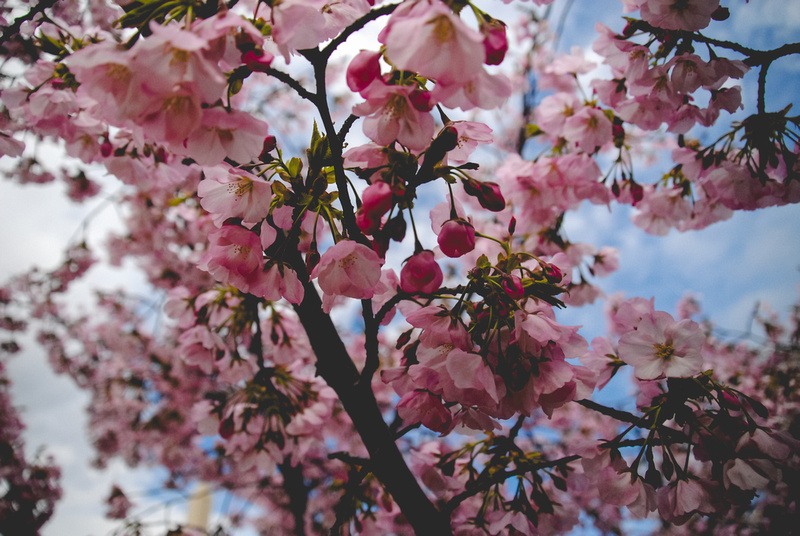 "Cherry Blossoms, Cherry Blossom, Festival, Accent, Accented, Aisle, Alepin, Alternative, Amazing, Antique, Antlers, Arch, Art, Artist, Artistic, Artsy, Autumn, Autumnal, Award, ""Award Winning"", Award-Winning, BBQ, Backyard, Ballroom, Band, Banquet, Bar, Barn, Bay, Bayside, Beach, Beachfront, Beaded, Beads, Beautiful, Beauty, Best, Bi, Big, Bird, Birds, Bisexual, ""Black Tie"", Bliss, Bohemian, Boho, Bouquet, Bouquets, Bow, Bride, Brides, Bridesmaid, ""Bridesmaid Gifts"", Bridesmaids, Bright, Budget, Cake, Calla, Candelabra, Candlelit, Capital, Capitol, Capture, Carriage, Casual, Catholic, Celebrate, Celebrates, Celebrating, Celebration, Ceremony, Chalkboard, Chandeliers, Charm, Charming, Cheers, ""Cherry Blossom"", ""Cherry Blossoms"", Chic, China, Christmas, Chuppah, Church, Cigar, Cigars, Circle, City, Class, Classic, Classy, Cocktail, Cocktails, Color, Colorful, Colors, Contemporary, Cool, Country, ""Country Club"", Couple, Craft, Crafty, Create, Creative, Crystal, Crystals, Cultural, Culture, Cupcake, Cupcakes, Custom, Customizable, Customized, DC, DIY, Date, Day, Decor, Delicate, Design, Designs, Dessert, Desserts, Destination, Detail, Detailed, Detailing, Details, Different, Differently, Digital, Discount, Disney, District, Dock, Document, Documentary, Downtown, Dream, Dreams, Dress, Dresses, Dupont, Easy, Elegant, Embroidered, Enchanting, Engaged, Engagement, Equality, Event, Events, Excellent, Excitement, Exciting, Exhibit, Fairytale, Fall, Families, Family, Famous, Fantastic, Farm, Feathers, Featured, Files, Film, Flawless, Floral, Florals, Florist, Flower, Flowers, Food, Forever, Formal, Frame, Friendly, Fun, Funny, Gallery, Garden, Gay, Gem, Gems, Geometric, Georgetown, Gift, Gifts, Glam, Glamorous, Glow, Glowing, Gold, Golf, ""Golf Course"", Gown, Graphic, Green, Groom, Grooms, Groomsman, Groomsmen, ""Groomsmen Gift"", ""Groomsmen Gifts"", Guest, Guests, Hair, Hall, Handmade, Happiest, Happiness, Happy, Hardy, Hartenstein, Hartenstine, Harty, Heart, Hearty, Hearty, Heirloom, Hip, History, History, Holiday, Holidays, Honor, Honor, Horse, Horseshoe, Hotel, House, Humor, Humorous, Husband, Inspiration, Intimate, Intricate, Investment, Invitation, Invitations, Ivy, Jewelry, Jewelry, Jewish, Katie, Knot, LGBT, Lace, Lacy, Laid-back, Lakeside, Lantern, Lanterns, Laugh, Laughing, Lesbian, Life, Light, Lighting, Lilies, Limo, Lingan, Local, Long-Sleeved, Long-sleeve, Love, Lovely, Lover, Loves, Loving, MD, MOH, Maid, Makeup, Manor, Mansion, Mansion, Marriage, Marry, Maryland, ""Mason Jar"", ""Mason Jars"", Memorial, Memories, Memory, Mismatch, Mismatched, Model, Modern, Moment, Montgomery, Monuments, Mountains, Multi-cultural, Museum, ""National Mall"", Natural, Nature, Nautical, Negatives, New, NoVA, Non-Traditional, Northern, Old, Open-minded, Orchid, Parents, Parties, Party, Partying, Pearl, Pearls, Perfect, Perfectly, Personal, Personalized, Petals, Photo, Photograph, Photographer, Photographer, Photographs, Photography, Photography, Photos, ""Photos from the Harty"", Pic, Picnic, Pics, Picture, Pictures, Pier, Plan, Planner, Planning, Plantation, Pool, Poolside, Preppy, Price, Priced, Priced, Pricing, Princess, Print, Printing, Professional, Proposal, Proposal, Proposed, Proposed, Rain, Rainy, Ranch, Rated, Reasonably, Reception, Religious, Restaurant, Retro, Ring, Rings, Romance, Romantic, Romantic, Rose, ""Rose Gold"", Roses, Rustic, Sailing, Sara, ""Sara Alepin"", Satin, Seaside, Seasonal, Shower, Shows, Signature, Silk, Silly, Simple, Small, Snow, Snowy, Social, Soft, Sophisticated, Sparkle, Sparkly, Spring, Staircase, Story, Striped, Stripes, Stunning, Style, Suit, Suits, Summer, Sunflower, Sunflowers, Sunrise, Sunset, Surprise, Surprise, Sweetheart, Sweethearts, Sweets, Talented, Teacup, Teacups, Tent, Terrarium, ""The Knot"", Theme, Tidal, Tie, Tips, ""Top Rated"", Traditional, Transgendered, Tree, Trend, Trendy, Tuscan, Tux, Tuxedo, Twinkle, Umbrella, Umbrellas, Union, Unique, Uniquely, VA, Value, Veil, Vintage, Virginia, Washington, Wed, Wedding, ""Wedding Dress"", ""Wedding Gown"", WeddingWire, Weddings, Whimsical, Whimsy, White, Wife, Wine, Winery, Winter, Wire, Wonderful, ""Bride to Be"""